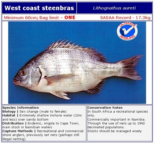 west coast steenbras ultimate angling the ultimate sa